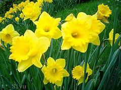 Spring – Frühling – 春