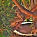 Koala by LMD64