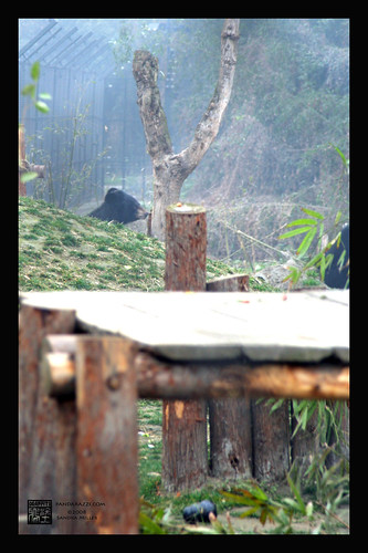 ANIMALS ASIA FOUNDATION, CHENGDU CHINA MOONBEAR RESCUE 2/08