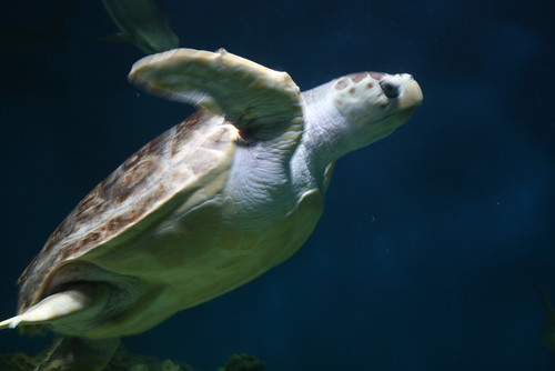 Wedding Weekend - Venue - Sea Turtle (by Deanna Felton)