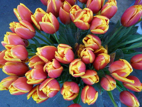 tulips at the market 93/365