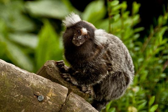 3744610040_b0570f0eac_o The Wildlife Park at Cricket St Thomas -  Chard Somerset, UK UK West Country  Wildlife UK Somerset Gardens