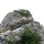 Der Kalkstein