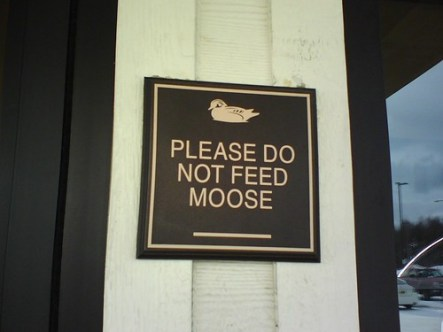 Please Do Not Feed Moose