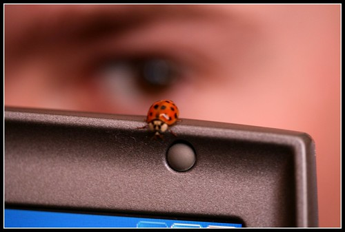 Luck be a lady(bug) by you.