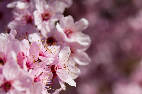 Días de primavera