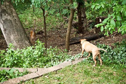 loki watching the deer