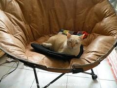 กับเก้า�ี้