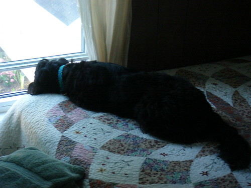 Her bed used to be right next to the window....where she could lay and look out the window all day.