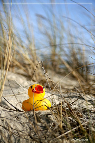 Flak d'oh à la plage