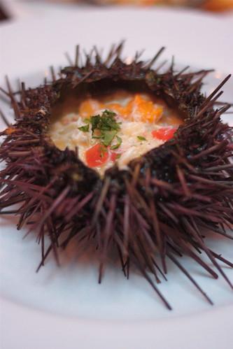Sea Urchin, Anchor & Hope
