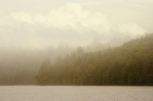 Foggy, Still