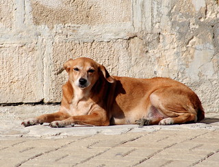 Mad Dogs and Englishmen; Marsaxlokk, Malta