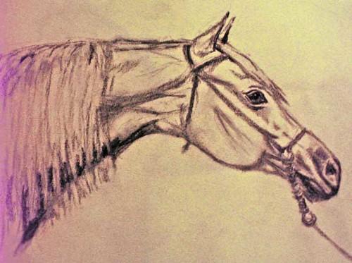 Arabian Horse. Charcoal Drawing and Photo: Ulla Hennig