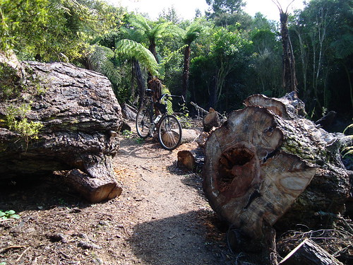 Unsworth Reserve Trail Clearing