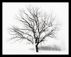 The Tree 54