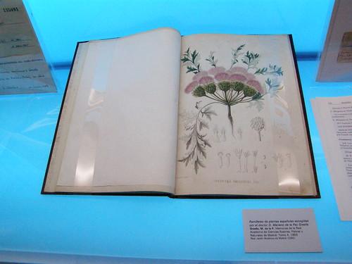 Descripción de Centaurea amblensis