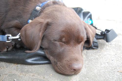 Donut als slapende pup