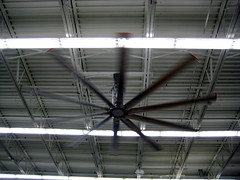 Biggest ceiling fan I've ever seen!