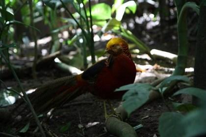 at the Bali Bird Park