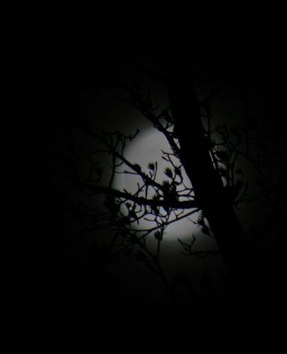 Full Moon 1