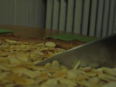 Almond and cream cheese tart