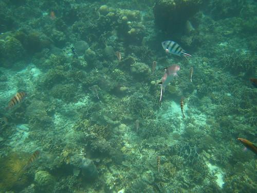 Underwater beauty (Ko Tao, Thailand)