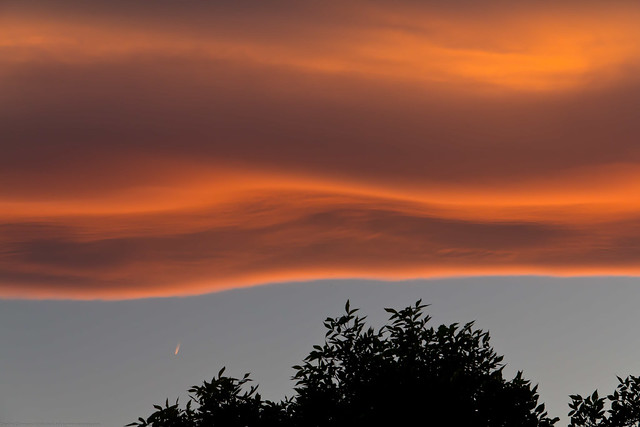 Canon 60D - Wave Type Sunset Clouds over Tree & Contrail