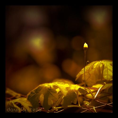 a bitter gourd plant