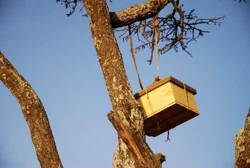Langstroth hive in Baringo Kenya