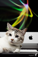 代言 iMac