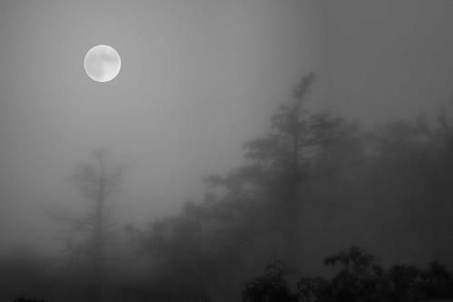 On a Misty Full Moon Night