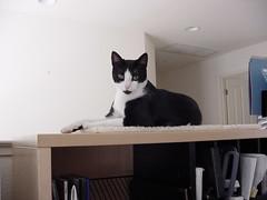 Valeria on the Desk