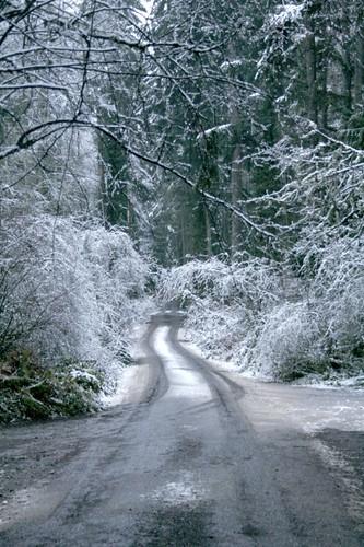 holly farm lane in snow
