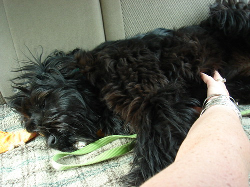 Eventually she was able to lay down and enjoy a little Tummeh Rub from Mama and relax for the rest of the ride home.