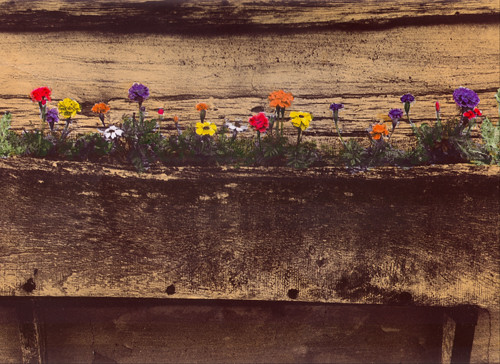 Hand color photo of a window/flower box   (c) Lynne Medsker