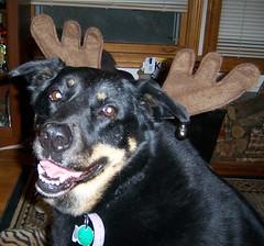 Sadie - Christmas 08