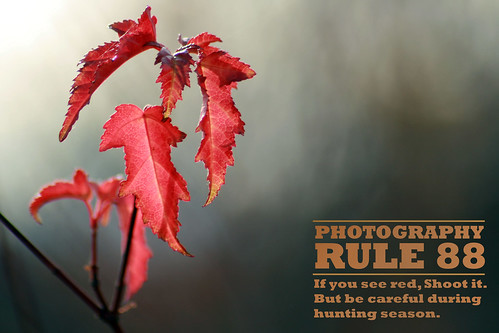 another sample from the rules of photography group