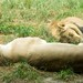 Woodland Park Zoo Seattle 044