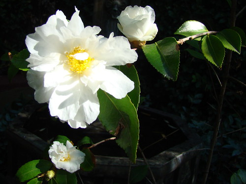 Yard flora