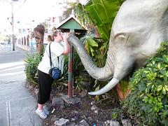 Kissing the Elephant - DSCN6594