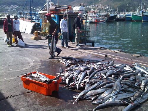Fresh Fish Sales Cape Town