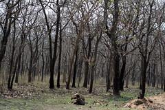Mudumalai Forest Road