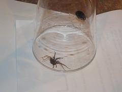 Catch & Release Spider