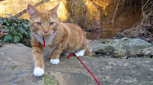 20090318 - cats outside - 177-7725 - Lemonjello - walking on rock