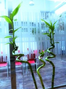 Bambú en la oficina