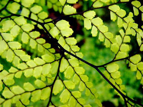 Branching Veins