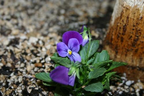 Earth Week Flower