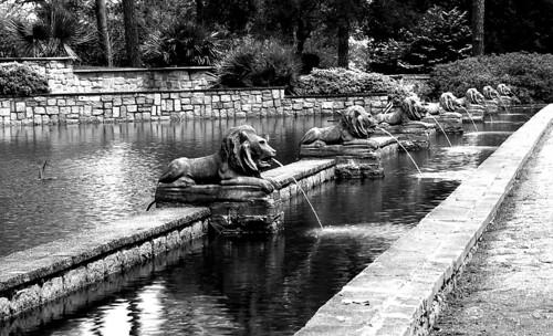 Lions, Norfolk Botanical Gardens. (Efke 25. Nikon F100. Epson V500.)