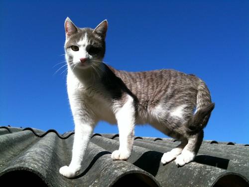 O gato subiu no telhado